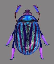 8-Escarabajo0